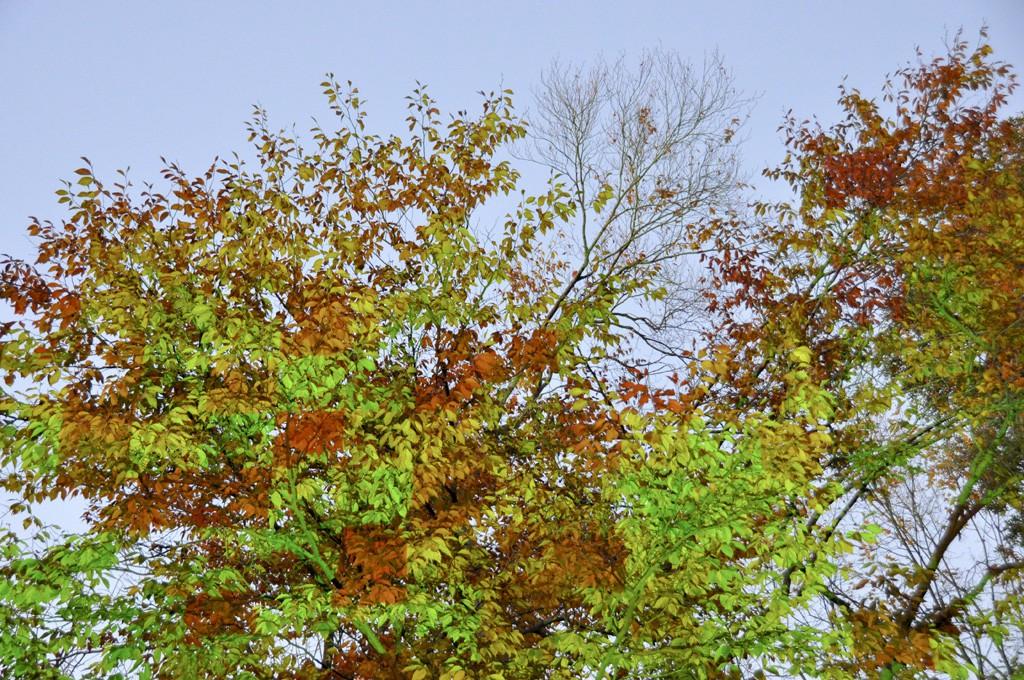 AutumnGridLeaves