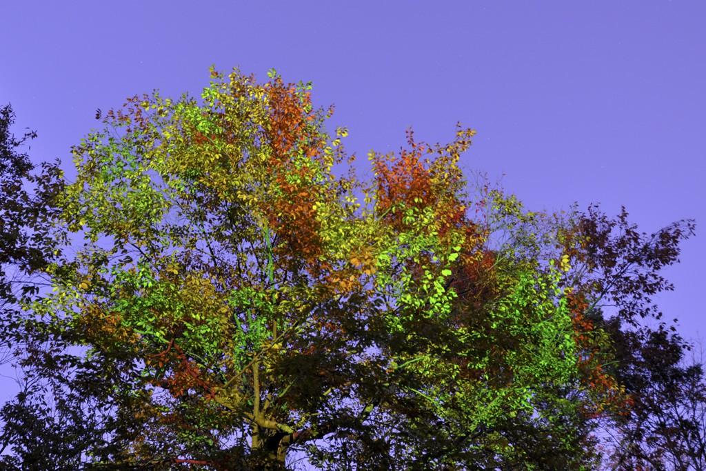 AutumnGridLeaves3